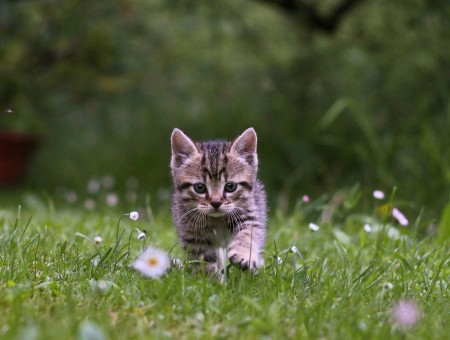 Little cat goes on grass