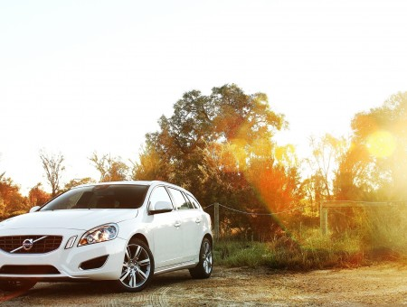 White volvo in forest