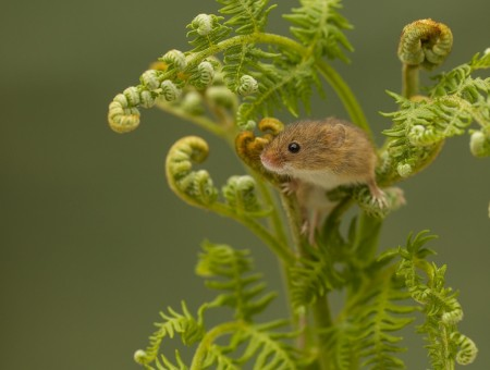 Mouse on plant