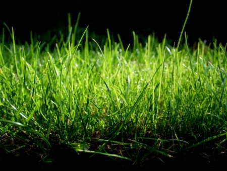 Grass in dark