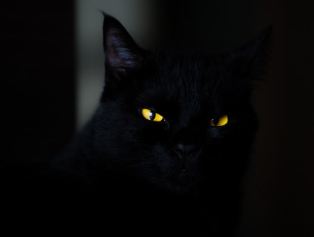 Yellow eyes of a black cat