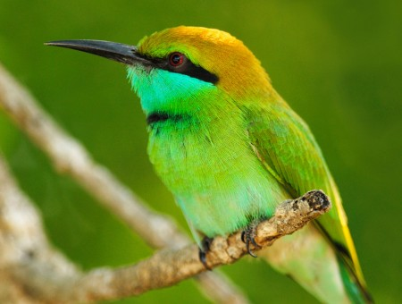 Cute yellow green bird