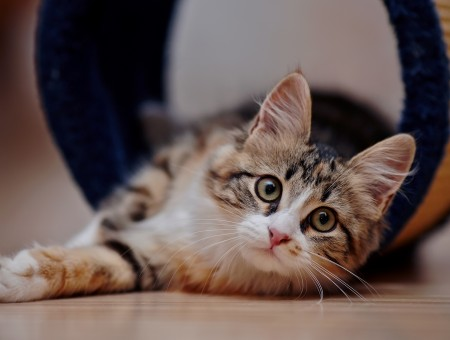 Cute cat on floor