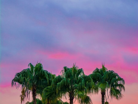 Palm and purple sky
