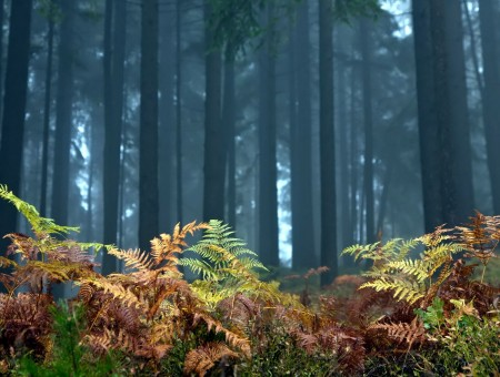 Fern and trees