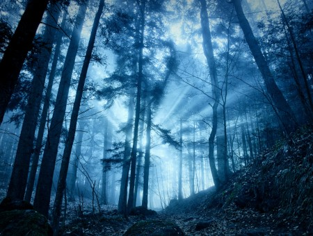 Blue fog in forest
