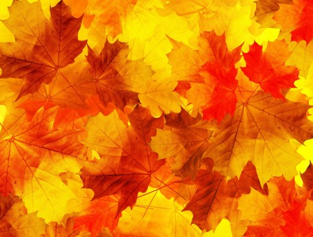 Autumn maple and oak leaves