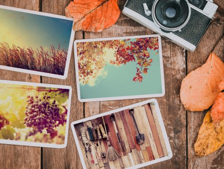 Autumn colorful photo