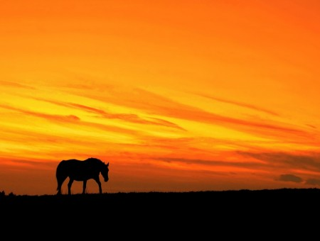 Night horse silhouette
