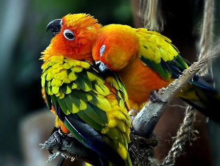 Two bright parrots on branch