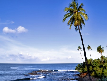 Island palm and sea