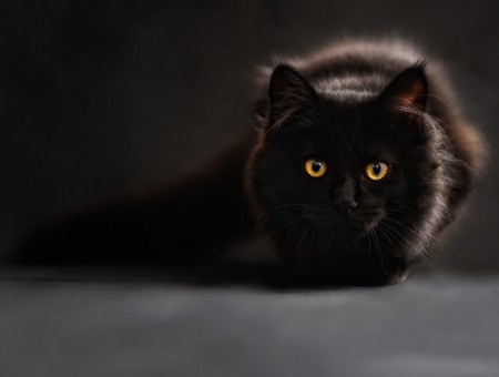 who is scared of the black cat