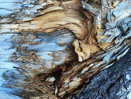 Wood texture in blue