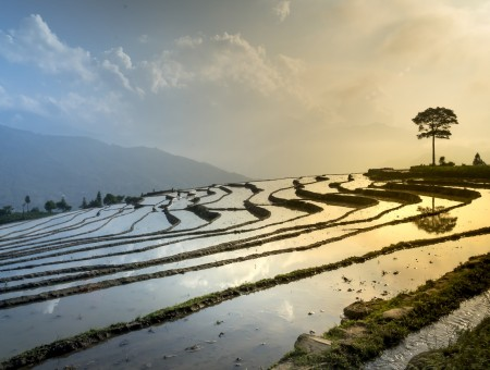 Rice fields in mountains