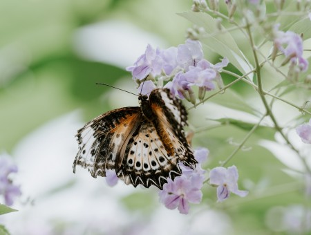 Tender flowers with butterfly